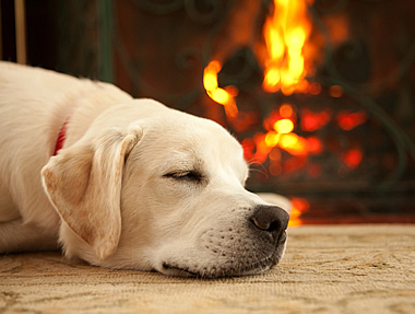 Sleeping by an Electric Fireplace